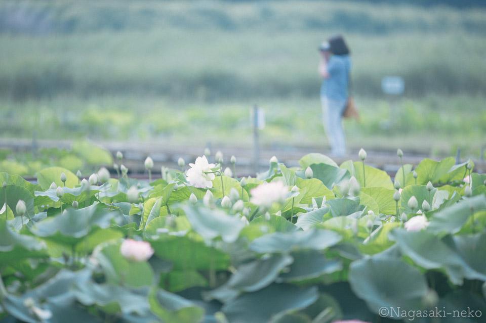 Karako lotus gardens