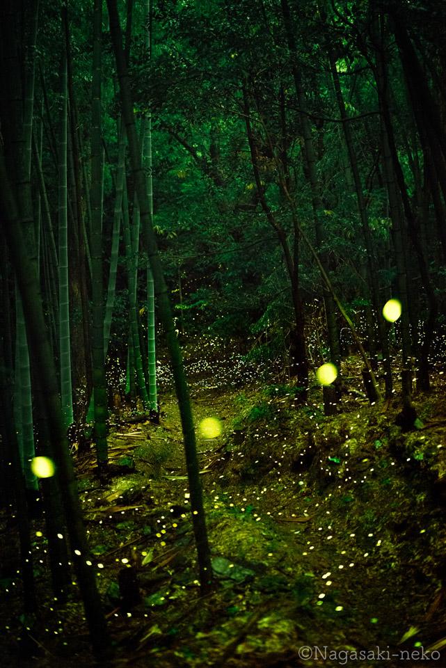 Fireflies in Kogakura